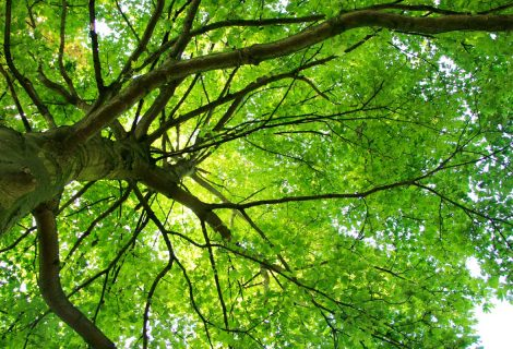Geef je mening over het groenbeleid in de buurt