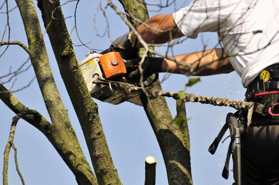 Top Garden Hoveniers breidt uit met Top Tree Boomverzorging