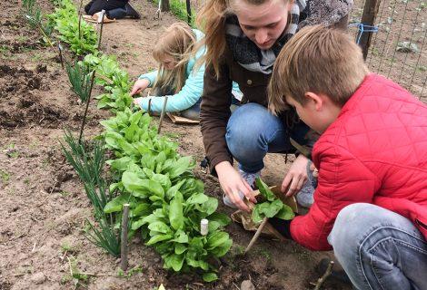 Tijd voor oogsten in Schooltuin Gouden Emmer