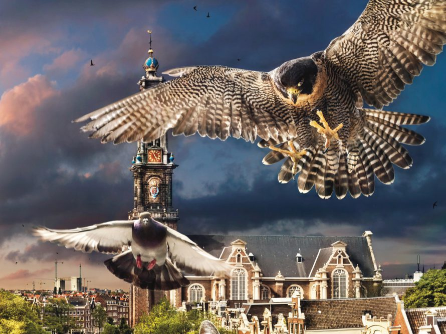 Film in het Dorpshuus: De Wilde Stad