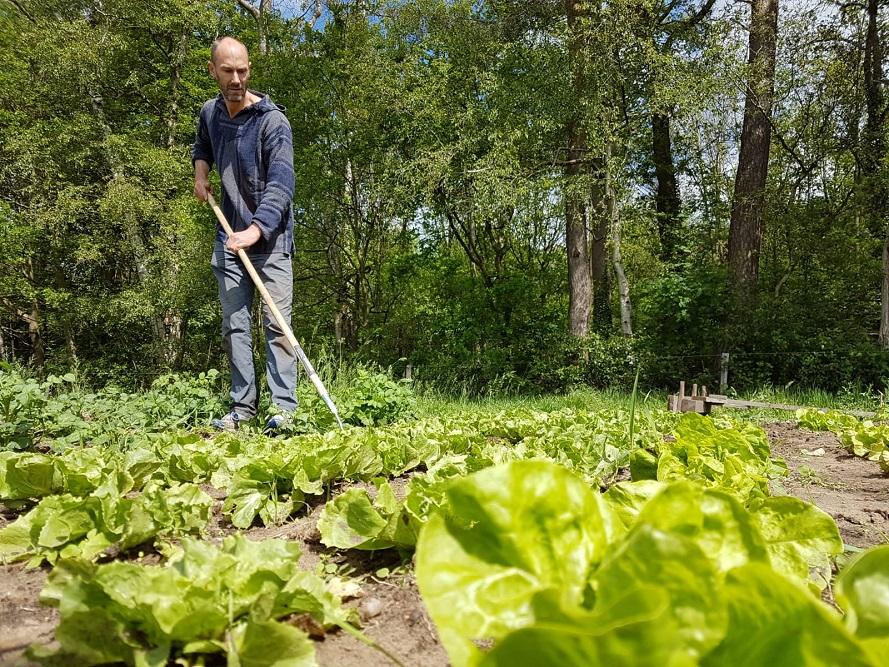 Zelf oogsten in de Tuin van Teun