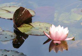 """Onthaasten en """"ont-moeten"""" met Meditatiegroep Heino"""